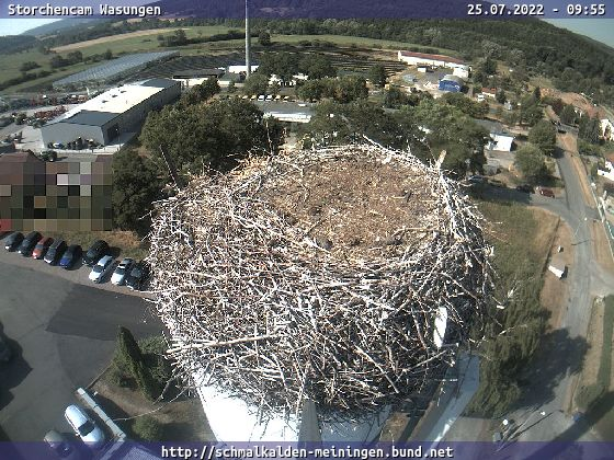 Wasungen – Storchennest Webcam Live